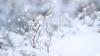 В зимние праздники в туристических пансионатах наплыв туристов