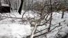 Упавшее обледенелое дерево убило девушку на востоке Москвы