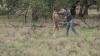 Австралиец подрался с кенгуру, защищая своего пса