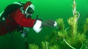 В Чёрном море на 20-метровой глубине дайверы установили новогоднюю ёлку