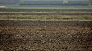 За девять месяцев 2016 урожай зерновых и овощей вырос на 32% по сравнению с 2015