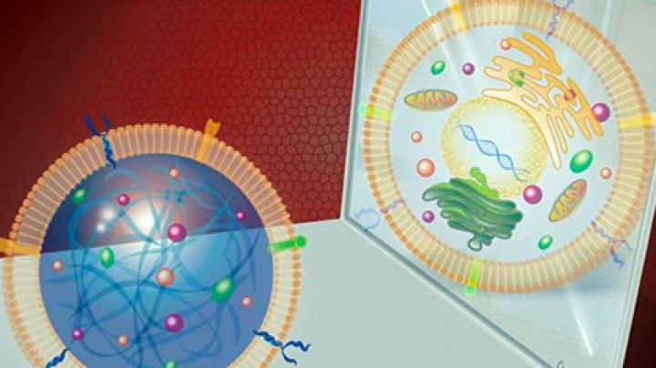 Созданы искусственные регенерирующие стволовые клетки