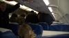 Россиянин устроил драку в самолете из-за очереди в туалет