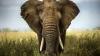 Ученые назвали самое заботливое животное в мире