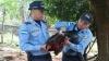 Особо опасный преступник: В Гондурасе посадили в тюрьму петуха