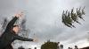 В Германии прошел чемпионат мира по метанию ёлок