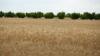 Аналитики прогнозируют рост в сферах сельского хозяйства, торговли и инвестиций