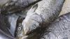 В столице нашли тонну рыбы, приготовленной в антисанитарных условиях