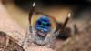 Биологи нашли пауков с цветным зрением