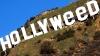 В США хулиган, изменивший надпись Hollywood, сдался полиции
