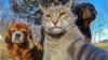 Дерзкое селфи отважного кота покорило пользователей Сети