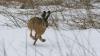 Охотников из Чимишлии оштрафовали за незаконную охоту на полевых зайцев