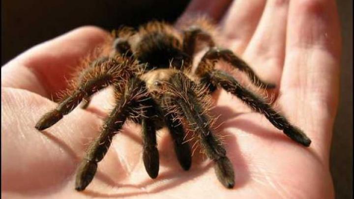 Австралийский зоопарк попросил горожан наловить пауков