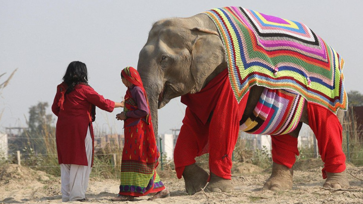 В Индии замерзающим по ночам слонам связали пижамы