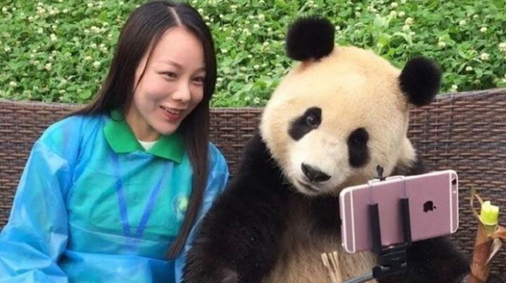 Панда, которая любит делать селфи, покорила пользователей Сети