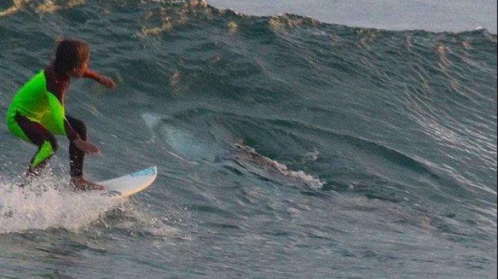 Отец 10-летнего сёрфера сфотографировал сына, когда к тому подплыла акула