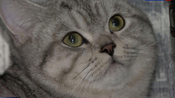 Кот, который умеет привораживать мужчин: Хозяин продал его за 5 миллионов рублей