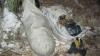 В Брянске женщина нашла два мешка с изуродованными трупами собак