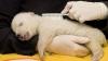 Белые медведи пришли в заброшенный поселок на Чукотке и покатались с горок