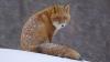 В Кирове введен карантин по бешенству из-за лисиц