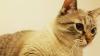 Учёные разрешили семьям с детьми заводить кошек