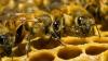 Роботы заменят вымирающих пчел