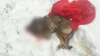 Мужчина растерзал собак, когда не смог добраться до их хозякий