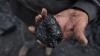 Китай ввел ограничения на импорт угля из КНДР