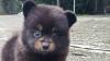 Пользователи сети зашли в тупик в попытке угадать зверя на фотографии