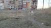 СМИ: махачкалинцы вышли на улицы отстреливать псов после гибели девятилетней девочки