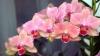 В оранжереях столичного Ботанического сада зацвели экзотические растения