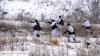 Украинские разведчики не вернулись с боевого задания на Луганщине