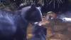 Медведица заставила непослушного детеныша перейти реку