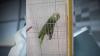 Попугай, исполнивший песню Эминема и Рианны, стал звездой сети