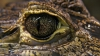 В Китае обнаружены останки древних крокодилов