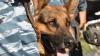 Интернет-пользователи объявили охоту на кинолога, издевавшегося над собакой
