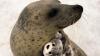 """""""Обнимашки"""" японского тюленя со своей игрушечной копией растрогали соцсети"""