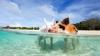 Плавающие свиньи на Багамах погибли после употребления пива и рома