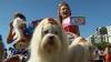 По пляжу в Рио-де-Жанейро прогулялись сотни собак в карнавальных костюмах
