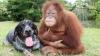 Собаки и обезьяны выбирают добрых людей