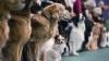 В столице проходит международная выставка собак