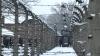 Австрийка осуждена за отрицание Холокоста