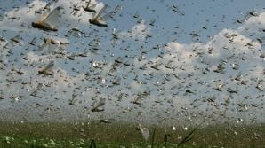 В Боливии более тысячи гектаров сельхозугодий уничтожены саранчой