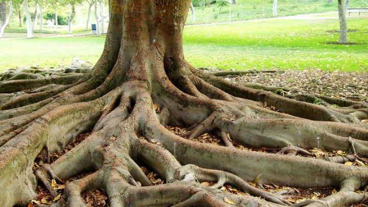 В Бангладеш нашли девочку-дерево (18+)