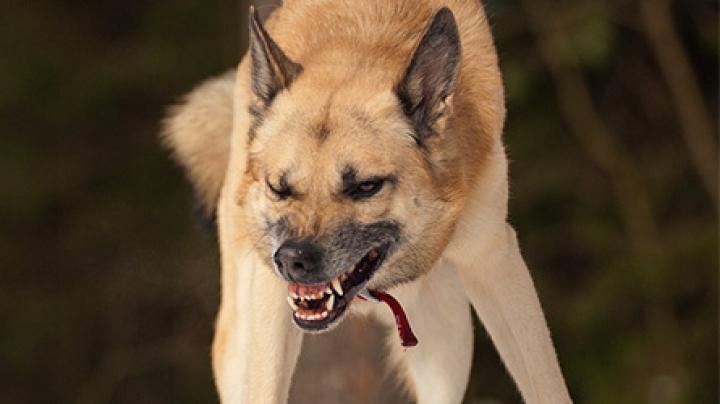 Установлена личность девочки, которую загрызли собаки на Урале