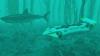 Китай и Россия намерены построить подводную лодку для туристов