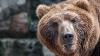 Видео: житель Ямала оседлал медведя на глазах у толпы