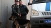 В Домодедово попытались незаконный ввезти 15 детенышей обезьян