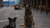 В Твери стая бездомных собак спасла тонущего пенсионера