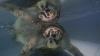В Таиланде умерла черепаха, проглотившая 915 монет